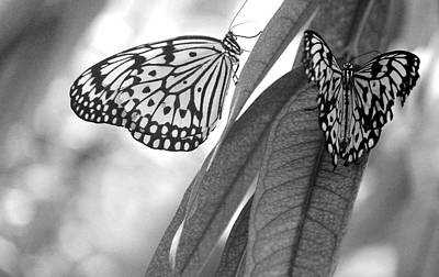 Insects Photograph - Butterflies by The Art Of Marilyn Ridoutt-Greene