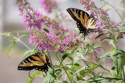 Photograph - Butterflies by Wayne Valler