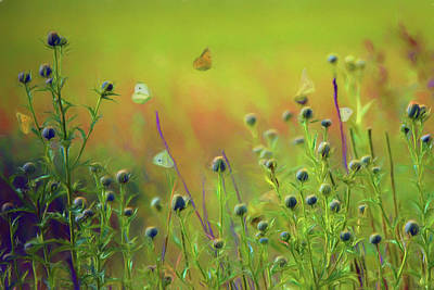 Photograph - Butterflies - Wildflowers by Nikolyn McDonald