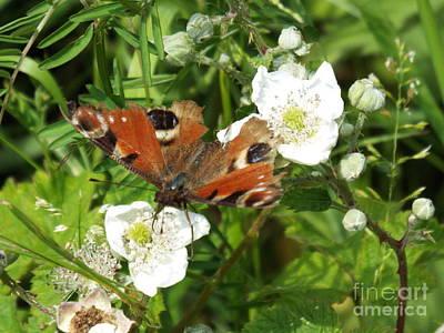 Photograph - Butterflower by John Bailey Photos