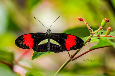 World Forgotten Rights Managed Images - Butterfly 04 Royalty-Free Image by Will Wagner