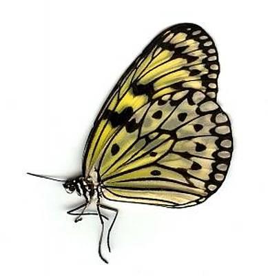 Steven White Photograph - Butterfly 1 by Steven White