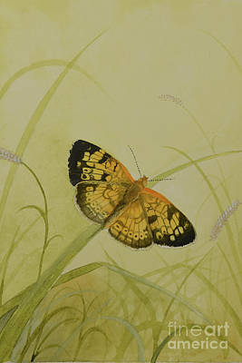 Painting - Butterfly 1 by Charles Owens