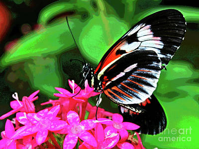 Photograph - Butterfly 1 by Larry Oskin