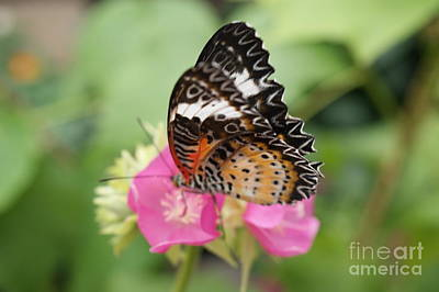 Butterfly 1 Art Print by Tina McKay-Brown