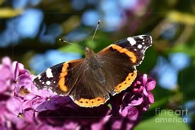 Photograph - Butterfly 12 by Jean Bernard Roussilhe