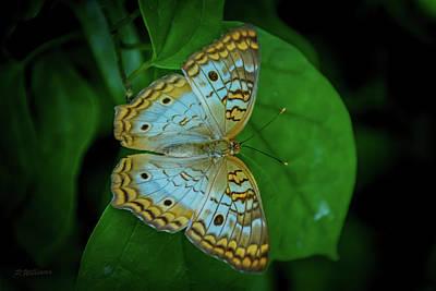 1920s Flapper Girl - Butterfly 122 by Pamela Williams