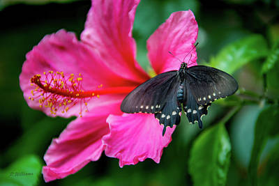 Photograph - Butterfly 14 by Pamela Williams