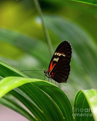 Photograph - Butterfly #1946 by Chuck Flewelling