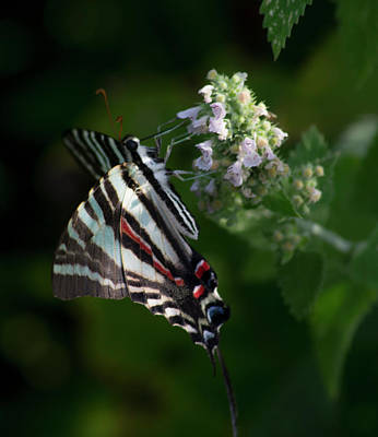 Photograph - Butterfly 2 by Buddy Scott