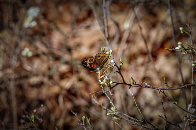 Photograph - Butterfly 2 by Doug Long