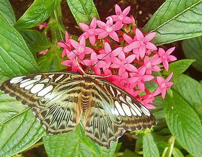 Lucille Ball - Butterfly 2 by Lisa Cassinari