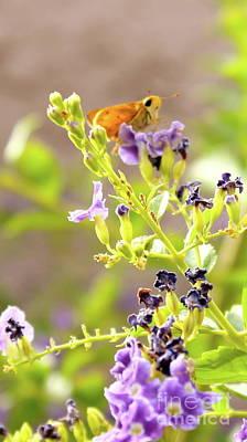 Photograph - Butterfly 2 by Pamela Walrath