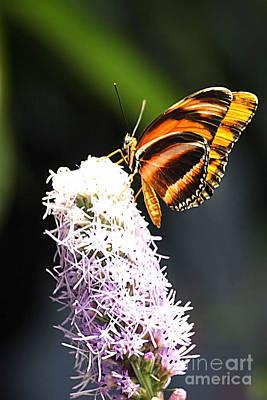 Butterfly 2 Print by Tom Prendergast