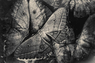 Photograph - Butterfly #2056 by Andrey Godyaykin
