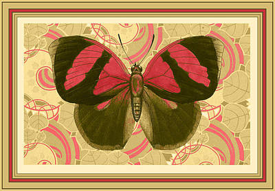 French Matting Painting - Butterfly 26 by Robert Todd