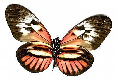 Steven White Photograph - Butterfly 3 by Steven White