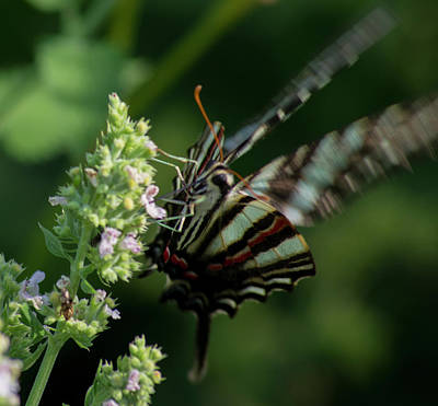 Photograph - Butterfly 3 by Buddy Scott