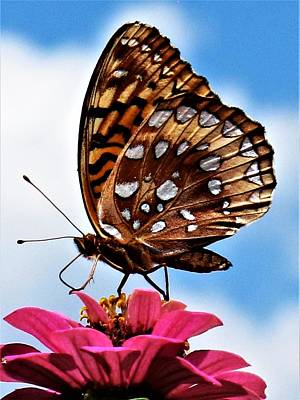 Photograph - Butterfly - 3 by Frank Chipasula