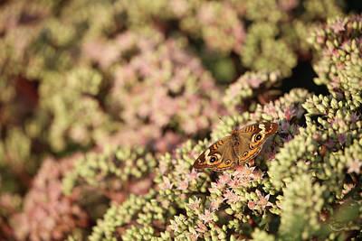 Butterfly 3d Art Print
