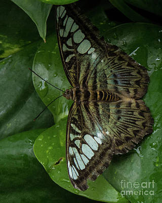 Photograph - Butterfly 4 by Christy Garavetto