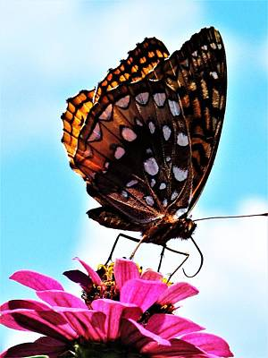 Photograph - Butterfly - 4 by Frank Chipasula