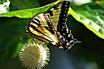 Butterfly 4 Art Print by Joe Faherty