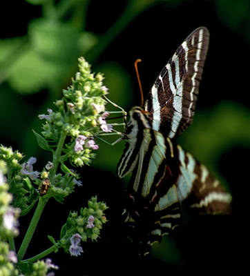 Photograph - Butterfly 5 by Buddy Scott