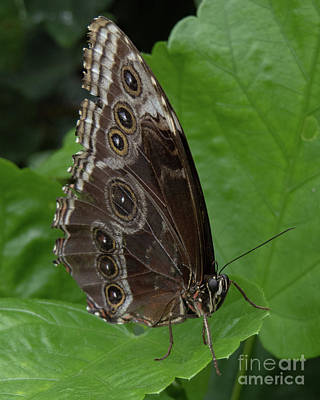 Photograph - Butterfly 5 by Christy Garavetto