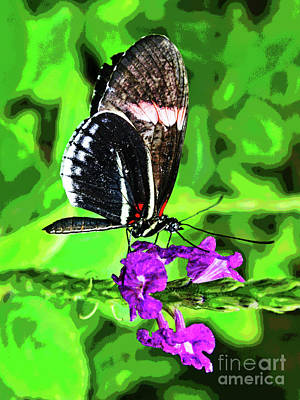Photograph - Butterfly 5 by Larry Oskin
