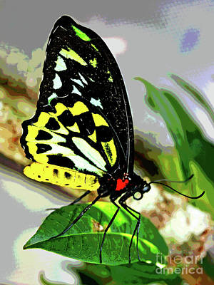 Photograph - Butterfly 7 by Larry Oskin
