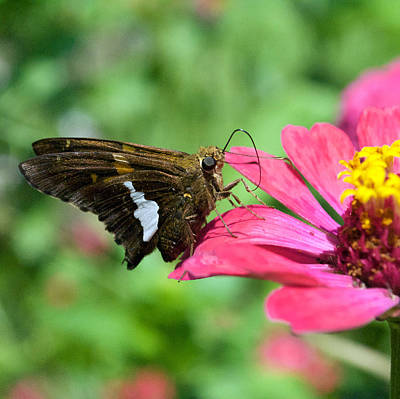 Dog And Butterfly Photograph - Butterfly 8-5 by Skip Willits