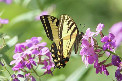 Digital Art - Butterfly #9 by David Stasiak