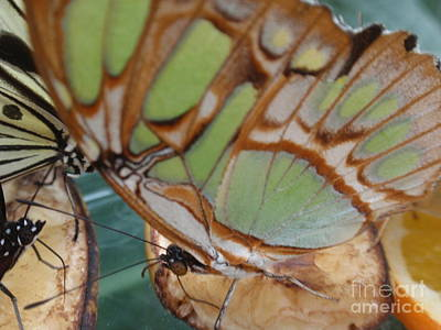 Abstractions From Nature Photograph - Butterfly Abstraction by Valia Bradshaw
