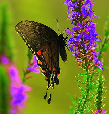 Yellowstone Digital Art - Butterfly by Aron Chervin