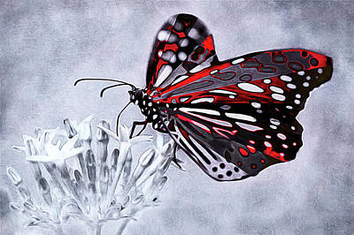 Mixed Media - Butterfly Aflame by Susan Maxwell Schmidt