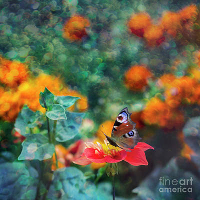 Photograph - Butterfly by Ezo Oneir