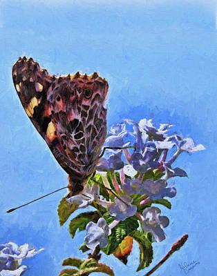 Photograph - Butterfly Amalfi Coast 1 by Helaine Cummins