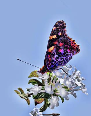 Photograph - Butterfly Amalfi Coast 2 by Helaine Cummins