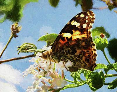 Photograph - Butterfly Amalfi Coast 4 by Helaine Cummins