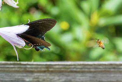 Photograph - Butterfly And Bee by D K Wall