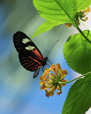 Wall Art - Photograph - Butterfly And Blue Sky by Brenda Layman