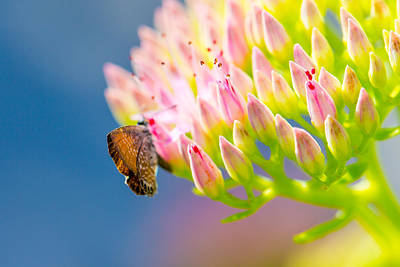 Photograph - Butterfly And Blue Sky by SR Green