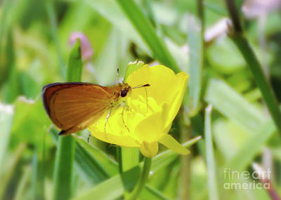 Photograph - Butterfly And Buttercup by Kerri Farley