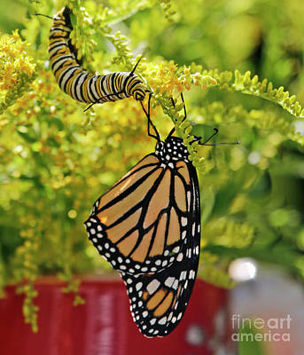 Photograph - Butterfly And Caterpillar Visit by Luana K Perez