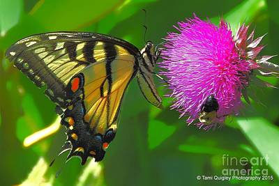 Photograph - Butterfly And Company by Tami Quigley