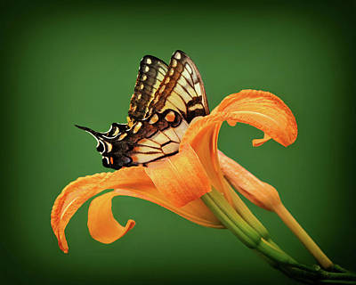 Photograph - Butterfly And Daylily by Carolyn Derstine