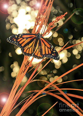 Photograph - Butterfly And Fairy Lights Photo by Luana K Perez