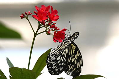 Photograph - Butterfly And Flower by Denise Mazzocco