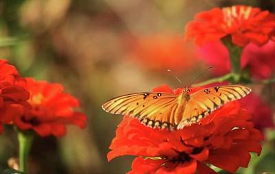 Photograph - Butterfly And Flower I by Donna G Smith